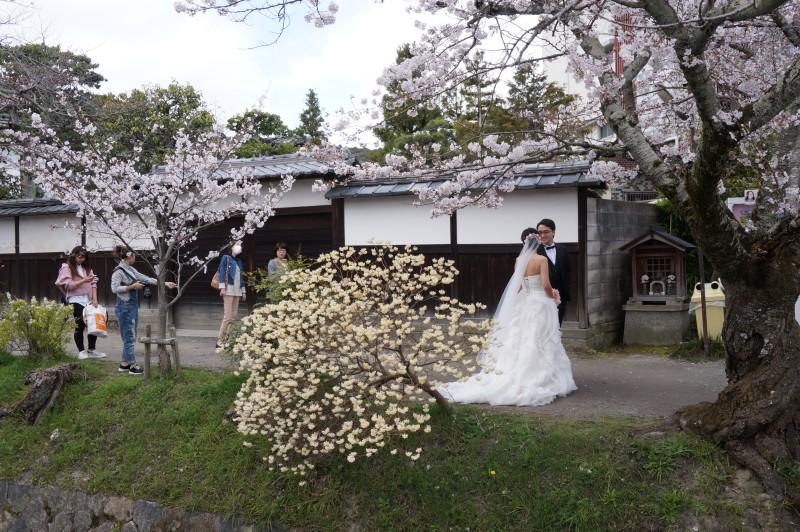 f:id:yasuu_kusayan:20170402194547j:plain